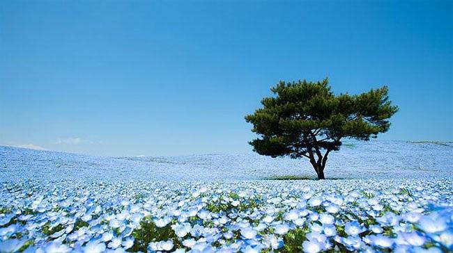 Núi Phú Sĩ, biểu tượng của nước Nhật cũng là một điểm đến trong hành trình.