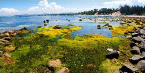 Bãi rêu và cỏ biển ở Bãi Yến.