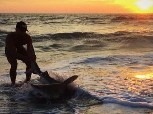 Sau đó, Sudal tóm đuôi cá mập và gắng sức lôi nó lên bờ.