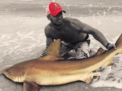 Sau khi gắn chip điện tử, Sudal lại thả cá mập về với đại dương.