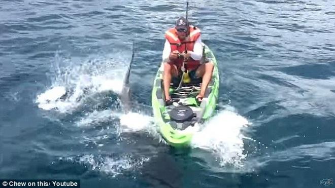 Con cá mập bò nặng 160kg tỏ ra vô cùng hung dữ.