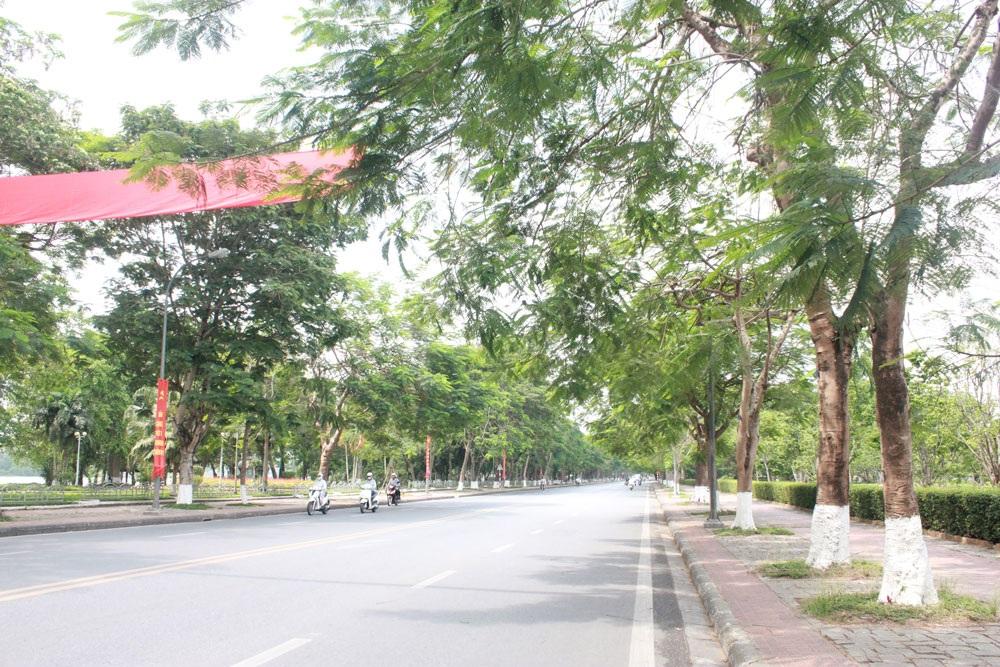 Ở Huế, không ai chặt cây điên rồ như vậy