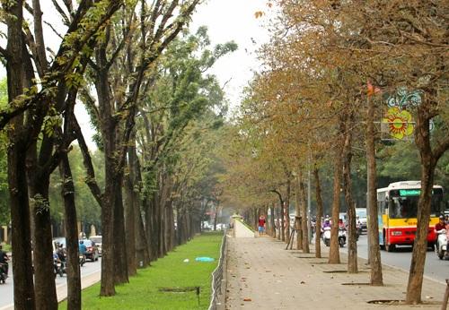 Hàng cây trên đường Kim Mã