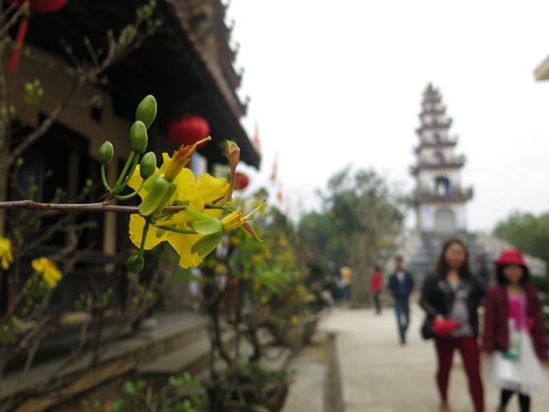 Các nhà chùa đều trang trí muôn sắc hoa xuân trong ngày Tết