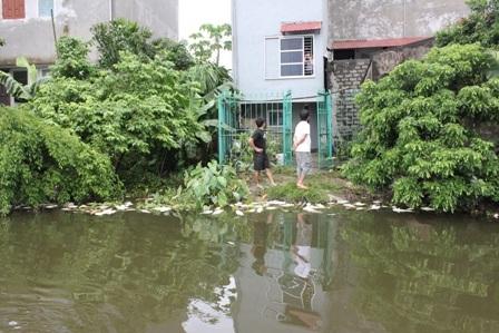 Cá chết trôi dạt vào bờ gây ảnh hưởng không nhỏ đến các hộ dân sống xung quanh.