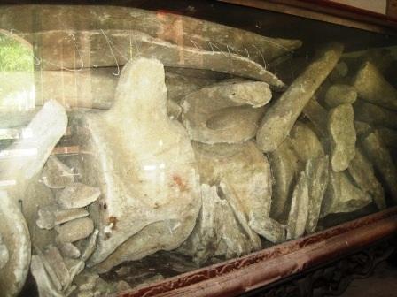 Bộ xương thuộc phần thân của cá Ông có từ hàng trăm năm đang được bảo quản rất kỹ.