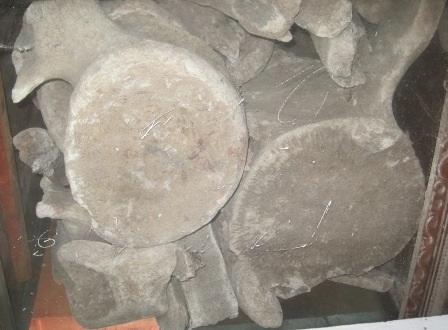 Những khúc xương cá Ông được người dân Ngư Lộc ví như thân cây cổ thụ.