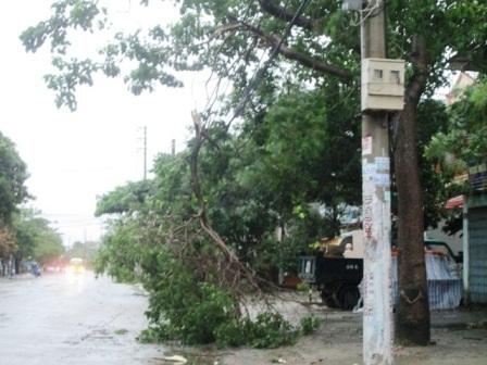 Nhiều cây cối ở thành phố Thanh Hóa cũng đã bị gãy đổ (Ảnh: Nguyễn Thùy).