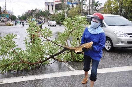 Tại Thái Bình, nhiều cây cối, nhà cửa và tài sản của người dân bị bão làm gãyđổ, hư hỏng.