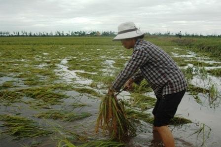 Người nông dânđắng lòng nhìn tài sản của mình bị nước lụt nhấn chìm.