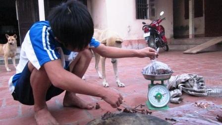 Mỗi kg thị chuột đồng có giá từ 60 - 80 nghìn đồng.