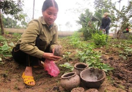 Nhiều người dân đến khu vườn này đào bới, tìm kiếm đồ cổ.