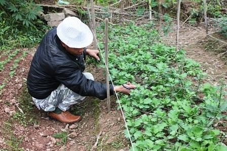 Người trồng hoa lo lắng vì thời tiết quá lạnh khiến hoa sinh trưởng và phát triển kém.