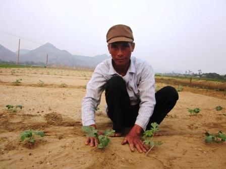 Ông Huê hướng dẫn cách chăm sóc dưa khi mới trồng.