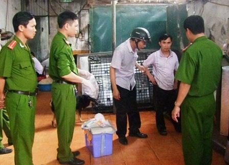 Lực lượng chức năng lấy mẫu da, bì lợn để kiểm định chất lượng.