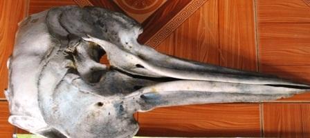 Chiếc hộp sọ lạ có mỏ dài giống một loài chim