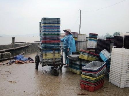 Người dân Hậu Lộc chuẩn bị các công việc chống bão.