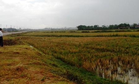 Khu vực mặt bằng 934, xã Đông Hải, TP Thanh Hóa.