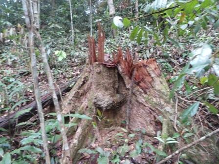 Khu vực bị tàn phá nằm trong rừng phòng hộ.