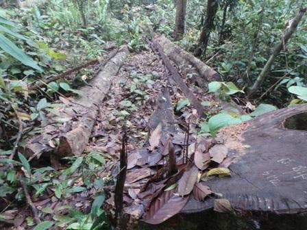 Cảnh tượng rừng bị tàn phá như một công trường.