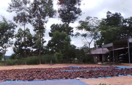 Điểm thu mua các loại dược liệu ở xã Xuân Qùy, huyện Như Xuân