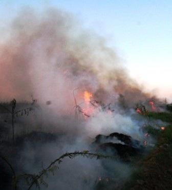 Hiểm họa khôn lường từ những vụ cháy cỏ