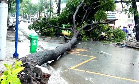 Hàng loạt cây xanh bị quật đổ sau cơn mưa - 1