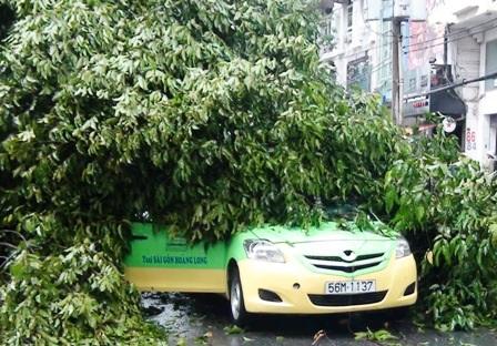 Hàng loạt cây xanh bị quật đổ sau cơn mưa - 2