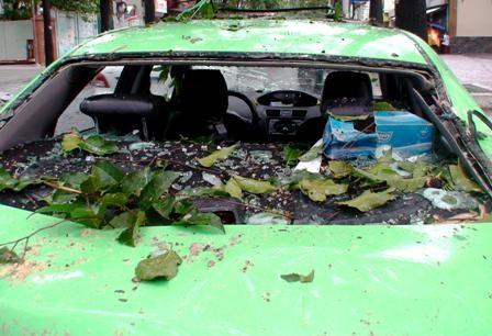 Hàng loạt cây xanh bị quật đổ sau cơn mưa - 3