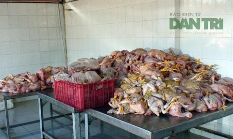 Số thịt gà bốc mùi hôi thối bị thu giữ.