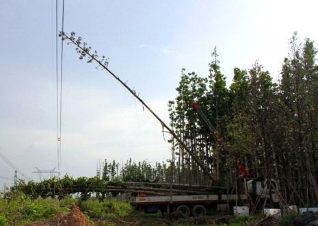 Hiện trường vụ ngọn cây dầu chạm vào đường dây diện 500KV làm 22 tỉnh thành mất điện vào chiều 22/5