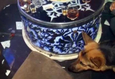 Chó nghiệp vụ được dẫn vào để truy tìm các chất ma túy