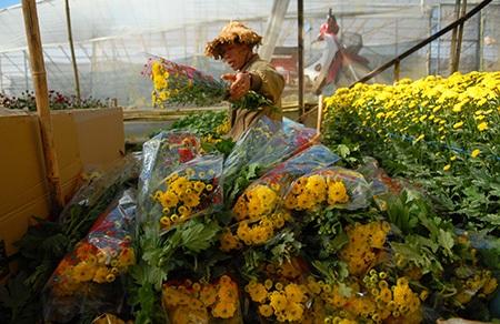 Từng luống hoa được trồng chăm chút xanh tươi chuẩn bị cho mùa thu hoạch mới.