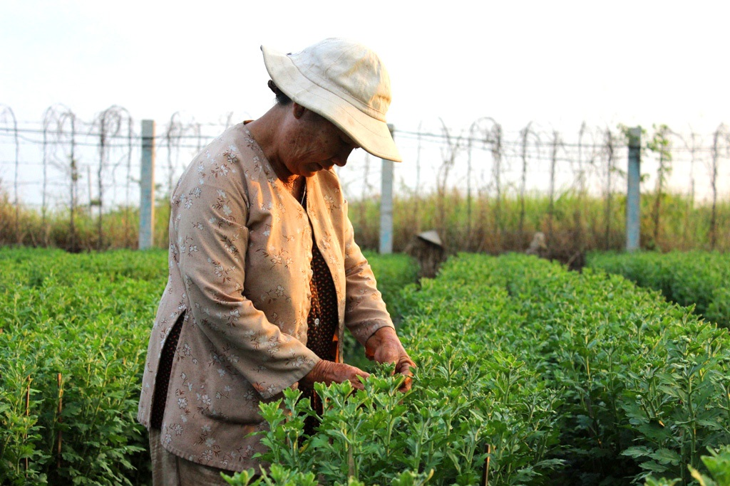 Người dân trồng hoa tin tưởng vào thị trường hoa tết năm nay sẽ khởi sắc