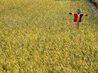 Nhật Bản phát hiện trường hợp gạo nhiễm xạ cao đầu tiên  - 1