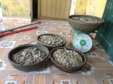 Số tiền cổ gia đình anh Hải phát hiện được lên đến 50kg