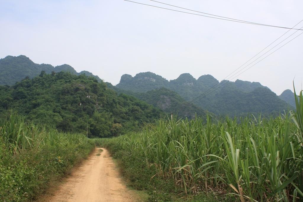 Đường dẫn vào chân núi