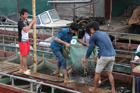 Nghề cá trên lòng hồ thủy điện sông Đà