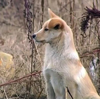 Trung Quốc: Cảm động chú chó nằm lỳ bên mộ chủ - 1