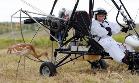 Putin bay cùng đàn sếu bằng tàu lượn