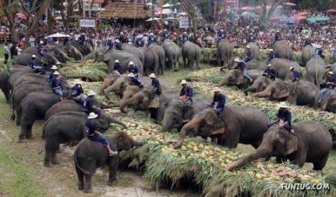 Ngày hội voi ở Chiang Mai (Thái Lan)