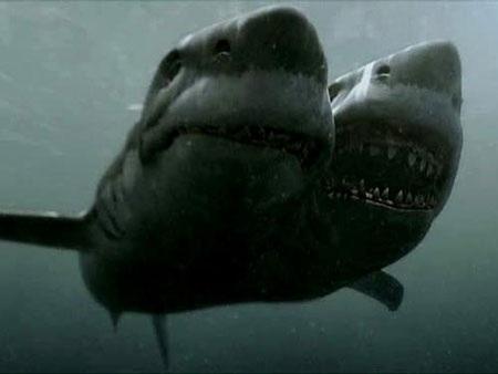 Cá mập hai đầu trong phim. Ảnh cắt từ phim Cá mập hai đầu