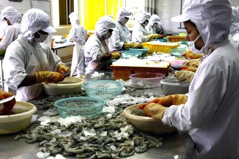 Chế biến tôm đông lạnh tại Công ty XNK thủy sản Thanh Hoá. Ảnh: Đình Huệ - TTXVN