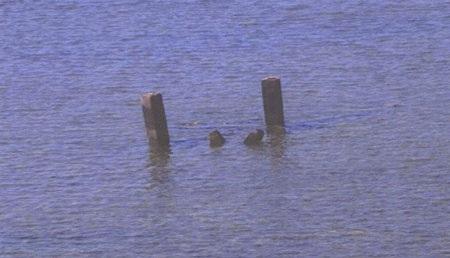 Hình ảnh các cột bê tông Philippines chụp được ở Scarborough.
