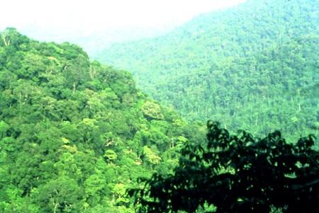 Hàng trăm cán bộ giữ rừng lay lắt sống vì không có nguồn lương - 3
