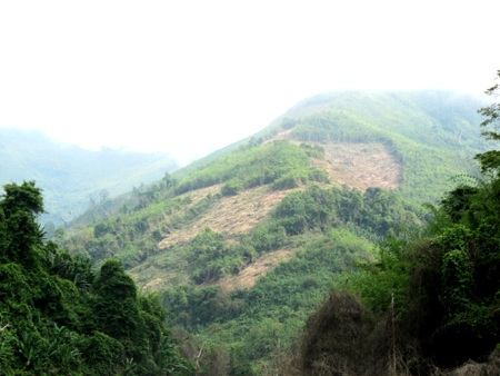 Hàng trăm cán bộ giữ rừng lay lắt sống vì không có nguồn lương - 2