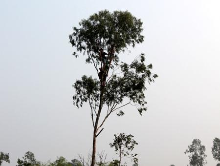 Hay chon von trên ngọn cây