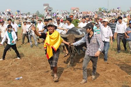 Chú trâu vô địch được dắt diễu quanh sân trong sự hò reo tán thưởng của khán giả