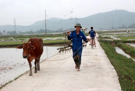 Con đường nông thôn mới bằng bê tông rộng 3m nối từ làng ra đồng.