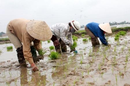 Mùng 4 Tết, nông dân Nghệ An đã xuống đồng chuẩn bị cho một mùa sản xuất mới.